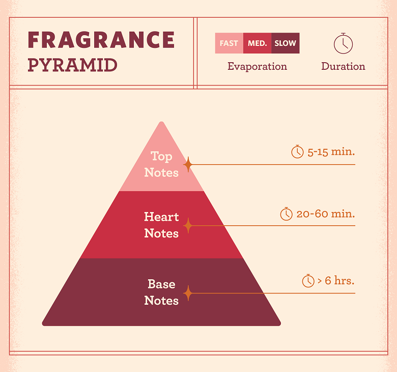the fragrance pyramid with top notes, heart notes and base notes