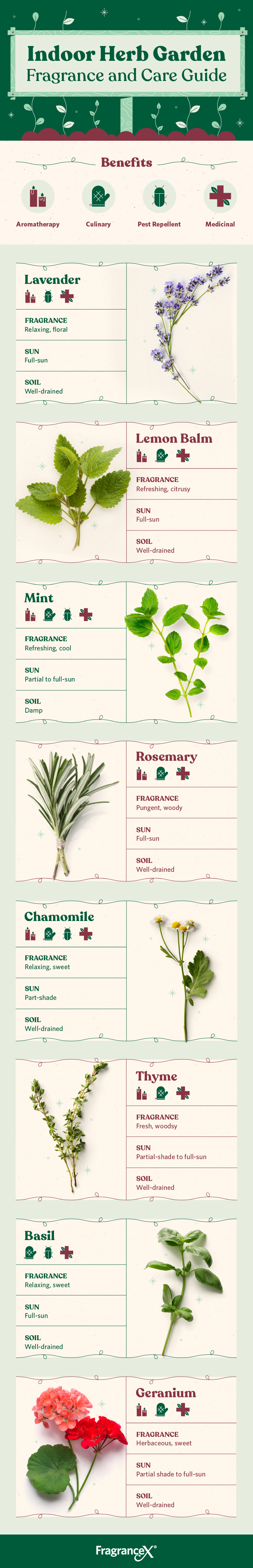 indoor herb garden infographic