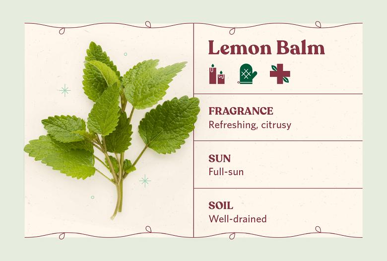 lemon balm herb care
